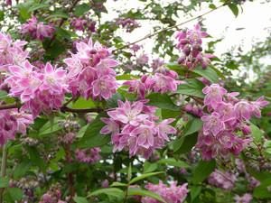 Dol_fleurs